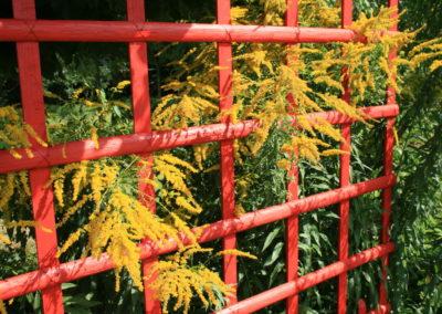 clôture ganivelle portail bois châtaignier Kastané #070